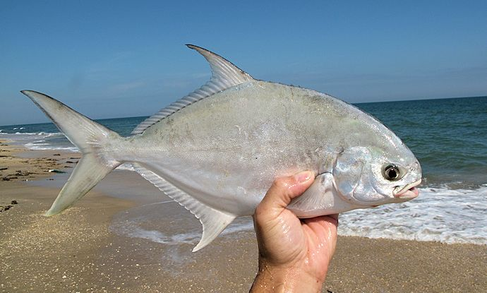 How to catch florida pompano the outdoors guy for Florida pompano fish