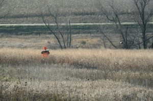 pheasant_hunting without a dog